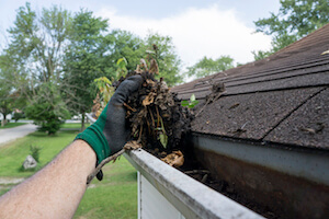Why you NEED to clean your gutters and how to do it!