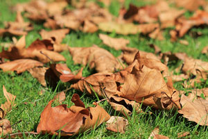 It's time for Virginia homeowners to think about fall home maintenance