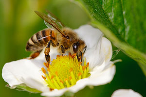 Pollinator Week is a good time to brush up on pollinators, honeybee health
