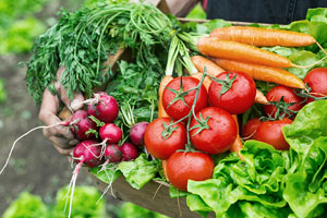 Consumers, farmers reap rewards from CSAs
