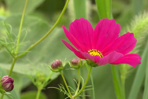 Consider farmscaping with flowers to control garden pests