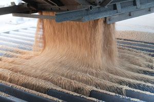 Wheat buyers checking quality during mid-Atlantic tour