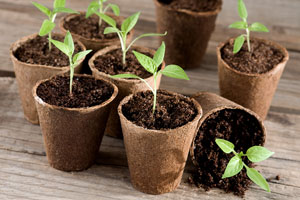 Gardeners advised to toughen up seedlings for spring planting
