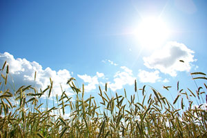 Farmers' outdoor work can increase skin cancer risk