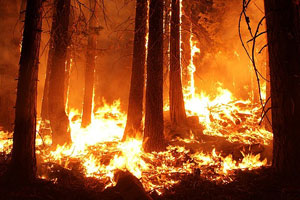 Help Smokey Bear prevent forest and farm fires