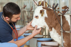 Veterinary college gives boost to Southwest Virginia farmers