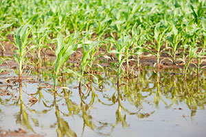Soggy fields causing problems for some Va. farmers