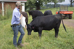 Large cattle operation credits success to teamwork