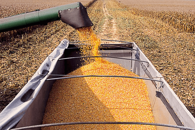 grain being loaded into a truck