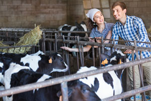 Dairy producers asked to participate in Farm Bureau survey