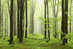 Farmers, forest landowners can apply for environmental quality incentives