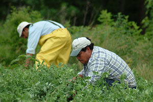 Farm Bureau: New data points to need for immigration reform