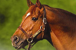 Celebrate Secretariat's legacy at the Virginia Horse Festival and year-round