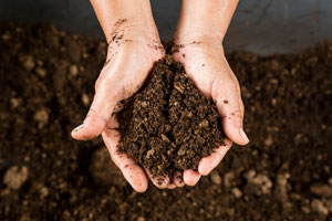 Test your soil now to grow better crops and gardens