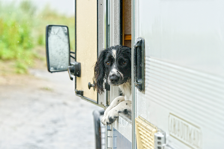 Dog out of camper window
